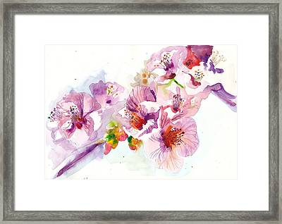 Sakura - Cherry Flowers Watercolor Framed Print