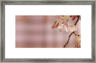 Sakura Framed Print by Lisa Knechtel
