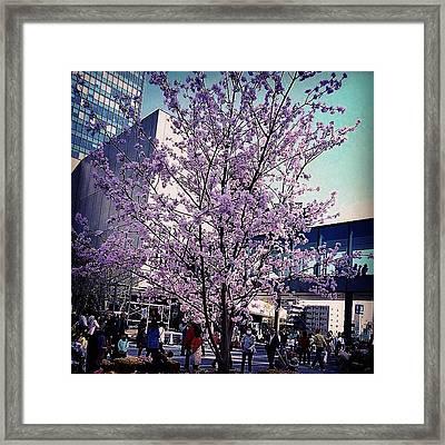 #sakura #tokyo #skytree #japan - Framed Print