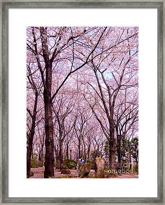 Sakura Tree Framed Print by Andrea Anderegg