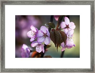 Sakura Framed Print by Vetre Antanaviciute Meskauskiene