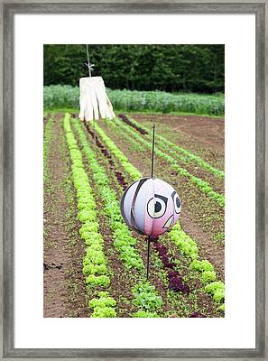 Salad Crops Growing At Washingpool Farm Framed Print by Ashley Cooper