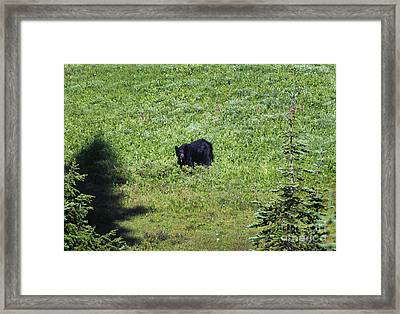 Salad For Dinner Framed Print by Mike  Dawson