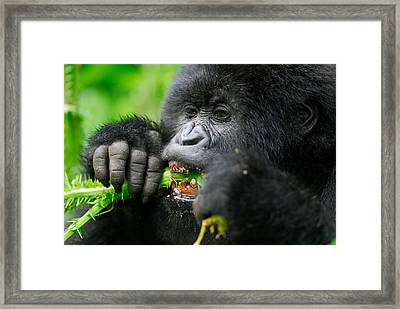 Salad Greens Framed Print by Stefan Carpenter
