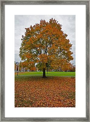 Salem Commons Foliage Framed Print