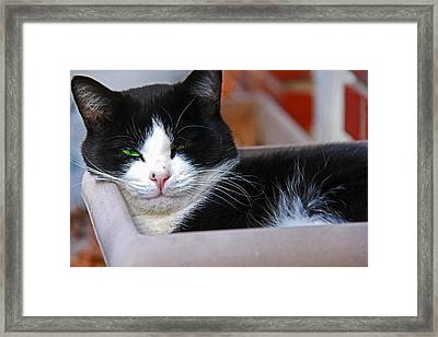 Salem Resting Framed Print by Andy Lawless