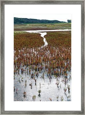 Salicornia On Salt Marsh Framed Print