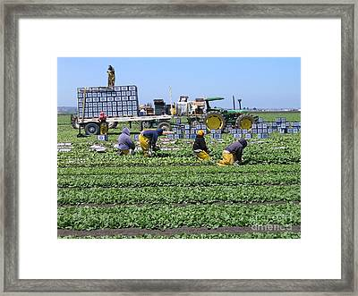 Framed Print featuring the photograph Salinas Farmworkers by James B Toy