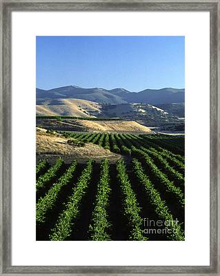 Salinas Valley Vineyard Framed Print by Craig Lovell