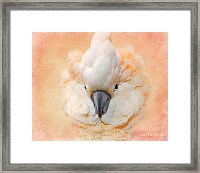 Salmon Crested Cockatoo Framed Print by Jai Johnson