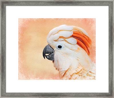 Salmon Crested Cockatoo Portrait Framed Print by Jai Johnson
