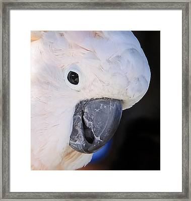 Salmon Crested Cockatoo Smiling Close Up Framed Print by  Andrea Lazar