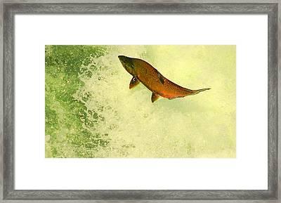 Salmon Run 3 Framed Print by Mamie Gunning