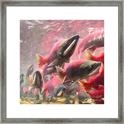 Salmon Run - Square - Painterly - 2013-0103 Framed Print
