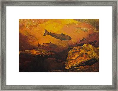 Salmon Run Framed Print by Terry Gill
