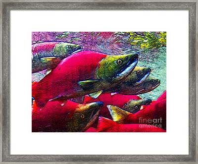 Salmon Run Framed Print by Wingsdomain Art and Photography