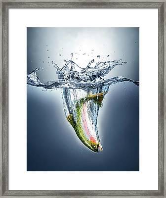 Salmon Splashing Into Water Framed Print by Leonello Calvetti