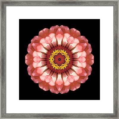 Salmon Zinnia Elegans Iv Flower Mandala Framed Print by David J Bookbinder