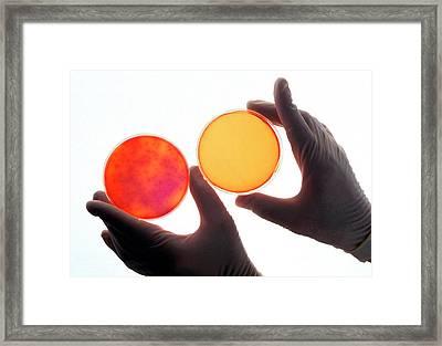 Salmonella Sterilisation Testing Framed Print by Ken Hammond/us Department Of Agriculture