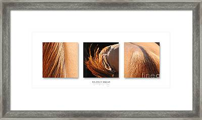 Salon D'equus Dark Framed Print