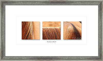 Salon D'equus Light Framed Print