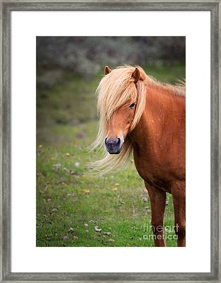 Salon Perfect Pony Framed Print