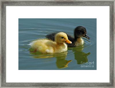 Framed Print featuring the photograph Salt And Pepper by Olivia Hardwicke