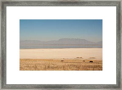 Salt Lake Bison Framed Print