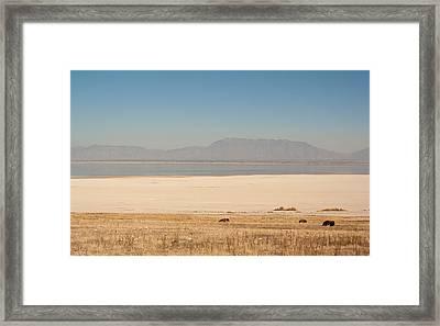 Salt Lake Bison Framed Print