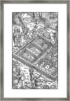 Salt Mining, 1556 Framed Print by Granger
