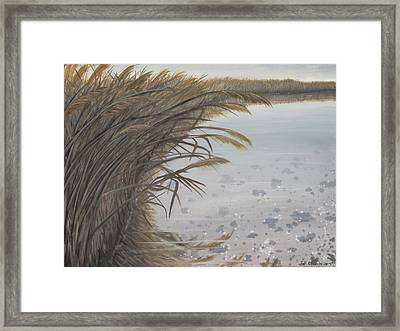 Salt Swamp #2  Framed Print