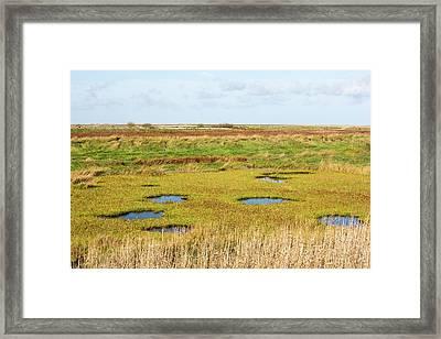 Saltmarsh Framed Print by Ashley Cooper