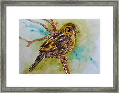 Saltmarsh Sparrow Framed Print by Beverley Harper Tinsley