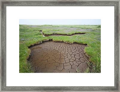 Saltmarsh With Flowering Sea Lavender Framed Print by Ashley Cooper