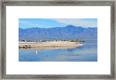 Salton Sea 2 Framed Print by Fraida Gutovich
