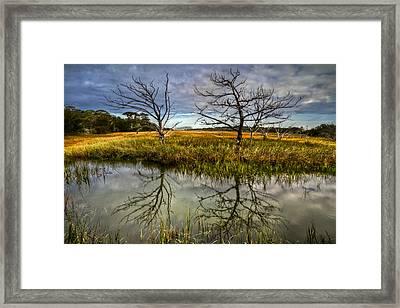 Salty Marsh At Jekyll Island Framed Print by Debra and Dave Vanderlaan