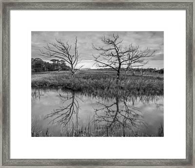 Salty Marsh At Jekyll Island In Black And White Framed Print