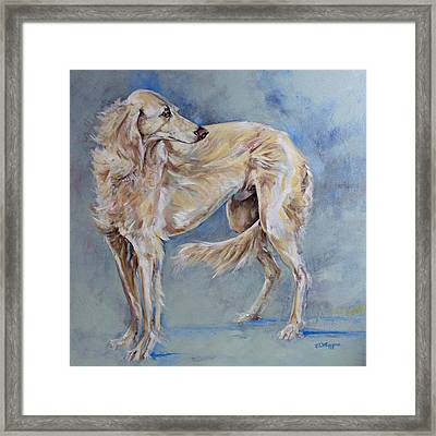 Saluki Framed Print by Derrick Higgins