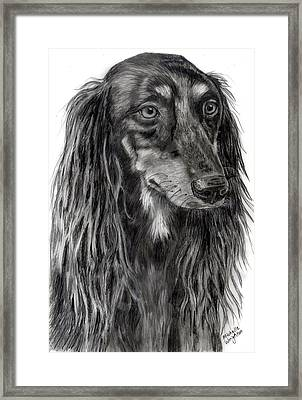 Saluki Black And White Drawing Framed Print by Michelle Wrighton
