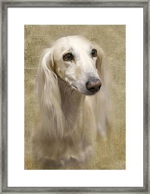 Saluki Framed Print by Rebecca Cozart