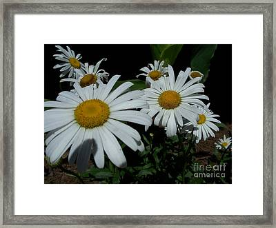 Framed Print featuring the photograph Salute The Sun by Marilyn Zalatan