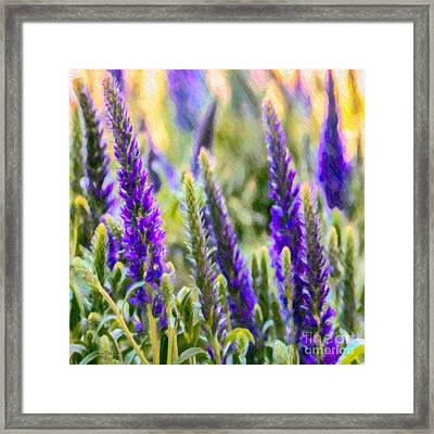 Salvia Sway Framed Print