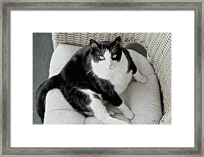 Why Are You Interrupting Me? Framed Print