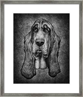 Sam Portait Black And White Framed Print by Kyle Wood