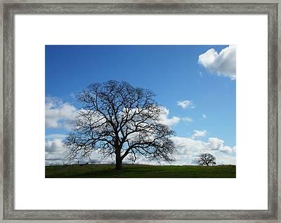 Same Tree Many Skies 11 Framed Print