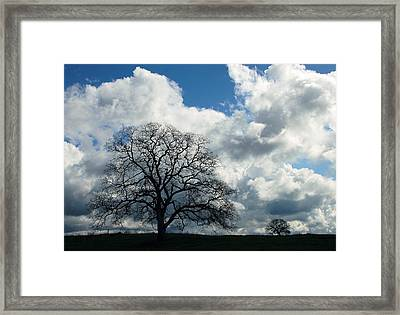 Same Tree Many Skies 13 Framed Print