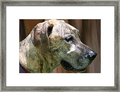 Framed Print featuring the photograph Sammy by Aimee L Maher Photography and Art Visit ALMGallerydotcom