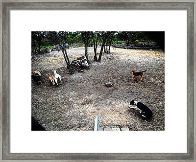Framed Print featuring the digital art Sammy Helping Dogs Herd Goats by Robert Rhoads
