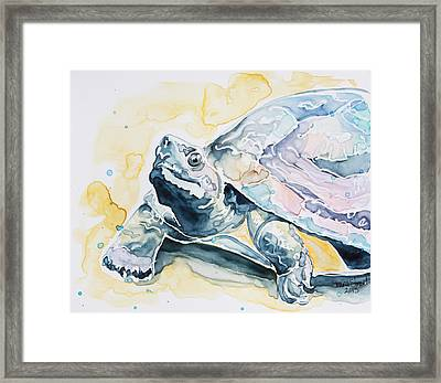 Sammy The Turtle Framed Print