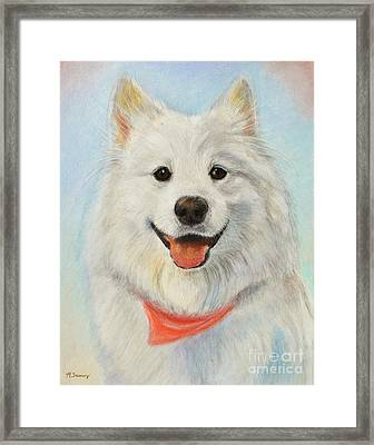 Samoyed Painting Framed Print by Kate Sumners